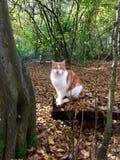 Chat reposant sur un identifiez-vous la forêt Image libre de droits