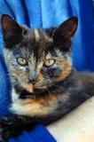 Chat retenu par Pet Owner images stock