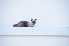 Chat rouan sur le mur Image libre de droits