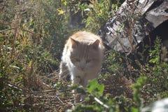 Chat rouge Photographie stock libre de droits