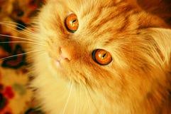 Chat rouge astucieux Image libre de droits