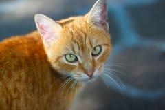 Chat rouge avec un oeil désireux image libre de droits