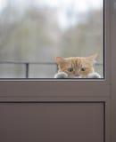 Chat rouge avec yeux tristes en dehors de la porte en verre Photo libre de droits