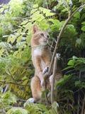 Chat rouge curieux dans l'arbre Images stock