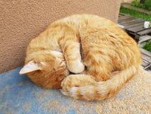 Chat rouge de sommeil Images stock