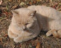 Chat rouge en nature Photos stock
