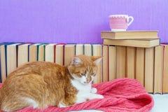 Chat rouge et blanc dormant sur l'écharpe rose Images libres de droits