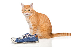 Chat rouge et espadrilles bleues Photos stock