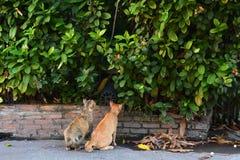 Chat rouge et gris se reposant sur le plancher et regardant quelque chose dans le jardin Image stock