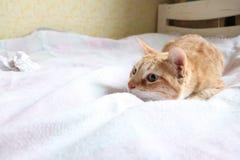 Chat rouge jouant dans le lit image stock