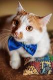 Chat rouge mignon avec le portrait de noeud papillon regardant des yeux Image stock