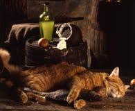 Chat rouge, poissons secs et crème aigre image libre de droits