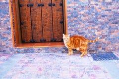 Chat rouge près de porte en bois sur la rue de toun photographie stock