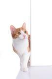 Chat rouge regardant autour d'un coin photos stock