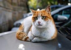 Chat rouge sans abri se trouvant sur le capot chaud de la voiture Images stock