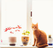 Chat rouge se reposant sur l'hublot Photographie stock libre de droits