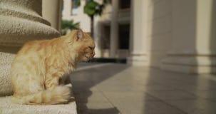 Chat rouge sur le fond de l'architecture Chat rouge en Grèce Chat avec un oeil endolori Bête perdue Ginger Cat de Santorini banque de vidéos