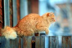 Chat rouge sur une barrière Photo stock