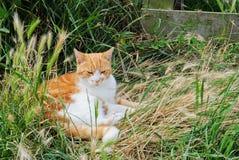 Chat s'étendant dans l'herbe Photo stock