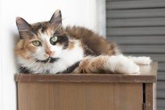 Chat s'étendant le jour chaud d'été Image stock