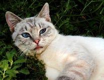 Chat s'étendant paisiblement dans l'herbe verte Photo libre de droits