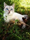 Chat s'étendant paisiblement dans l'herbe verte Photographie stock libre de droits