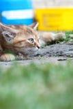 Chat s'étendant sur le cordon Images stock