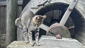 Chat s'étirant sur le moulin Images libres de droits