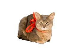 Chat s'usant la proue rouge Photo libre de droits