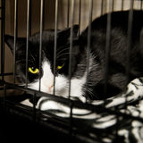 Chat sans abri photos libres de droits