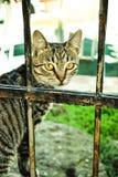 Chat sans abri dans une cage Photographie stock