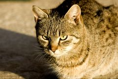 Chat sauvage Photos libres de droits