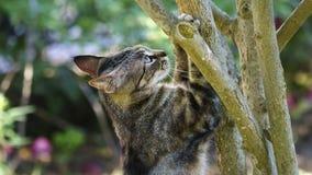 Chat sauvage avec des pattes sur un arbre images libres de droits