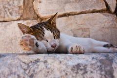 Chat sauvage de sommeil Image libre de droits