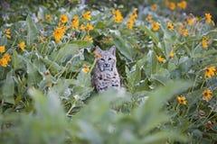 Chat sauvage en fleurs Photo libre de droits