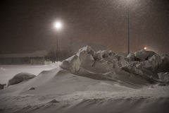 Chat sauvage enlevant la neige Photo stock
