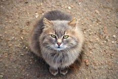 Chat sauvage et sauvage avec les yeux verts vous regardant image stock