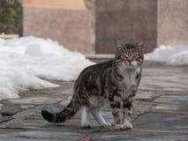 Chat sauvage et sans abri sur le plancher d'asphalte Chat abandonné regardant dedans Photos libres de droits