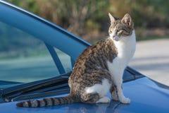 Chat sauvage et sans abri sur une voiture Adoption d'un animal familier Photo stock