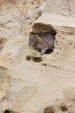 Chat sauvage regardant hors de son repaire Images libres de droits