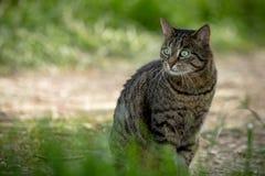 Chat sauvage se reposant au sol dans la forêt Images libres de droits