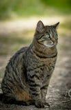 Chat sauvage se reposant au sol sur le fond vert Image stock