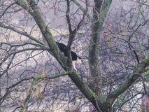 Chat sauvage se reposant sur l'arbre Images stock