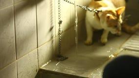 Chat se baignant à la pièce de bain banque de vidéos
