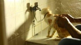 Chat se baignant à la pièce de bain clips vidéos