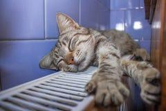 Chat se dorant sur la batterie Photos stock
