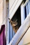 Chat se penchant hors d'une fenêtre à Lisbonne photos libres de droits