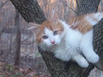 Chat se reposant dans l'arbre Photo libre de droits