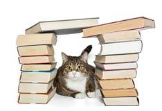 Chat se reposant dans la maison des livres Photos stock