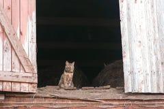 Chat se reposant dans le grenier dans le grenier à foin images libres de droits